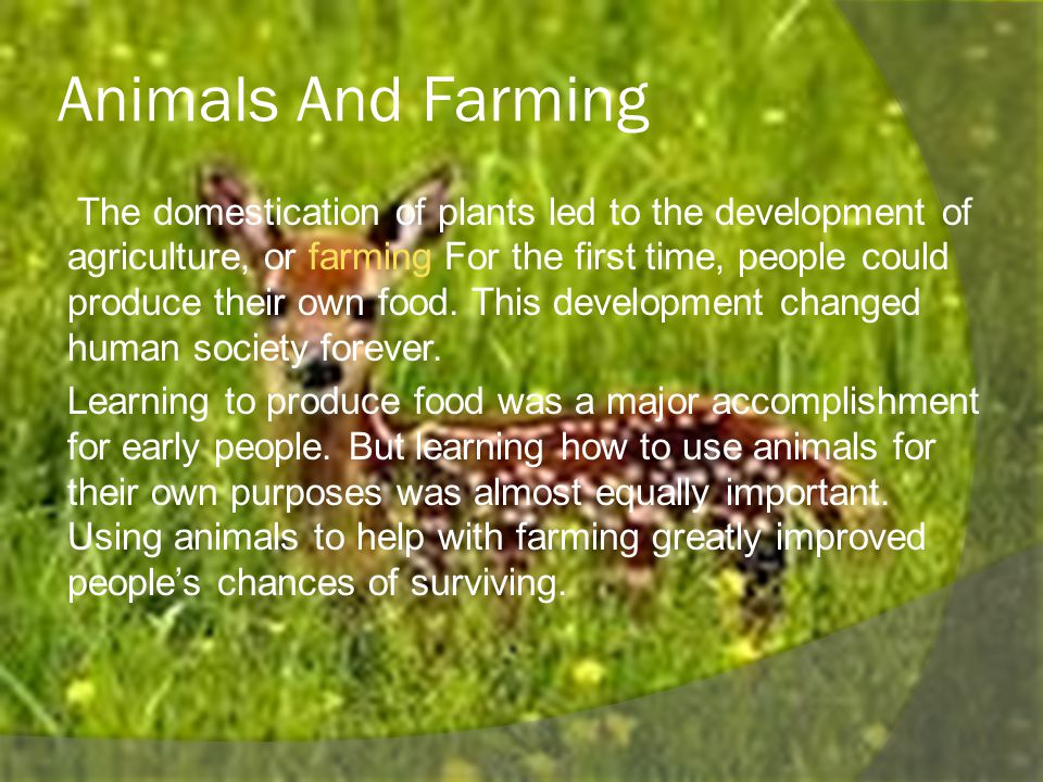 Animals And Farming