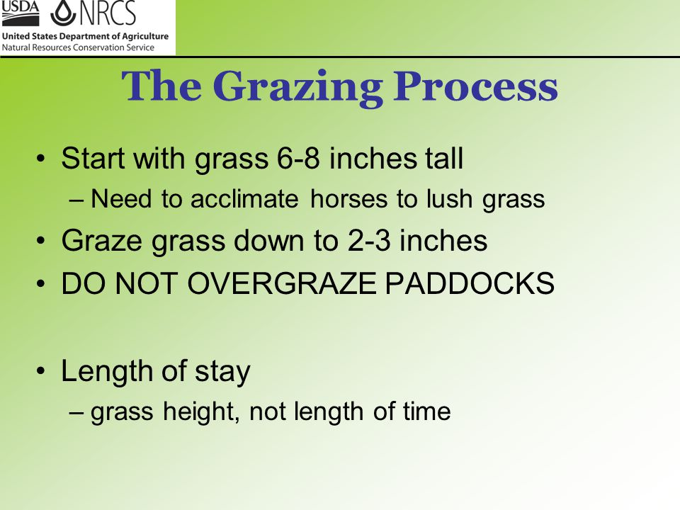 The Grazing Process Start with grass 6-8 inches tall