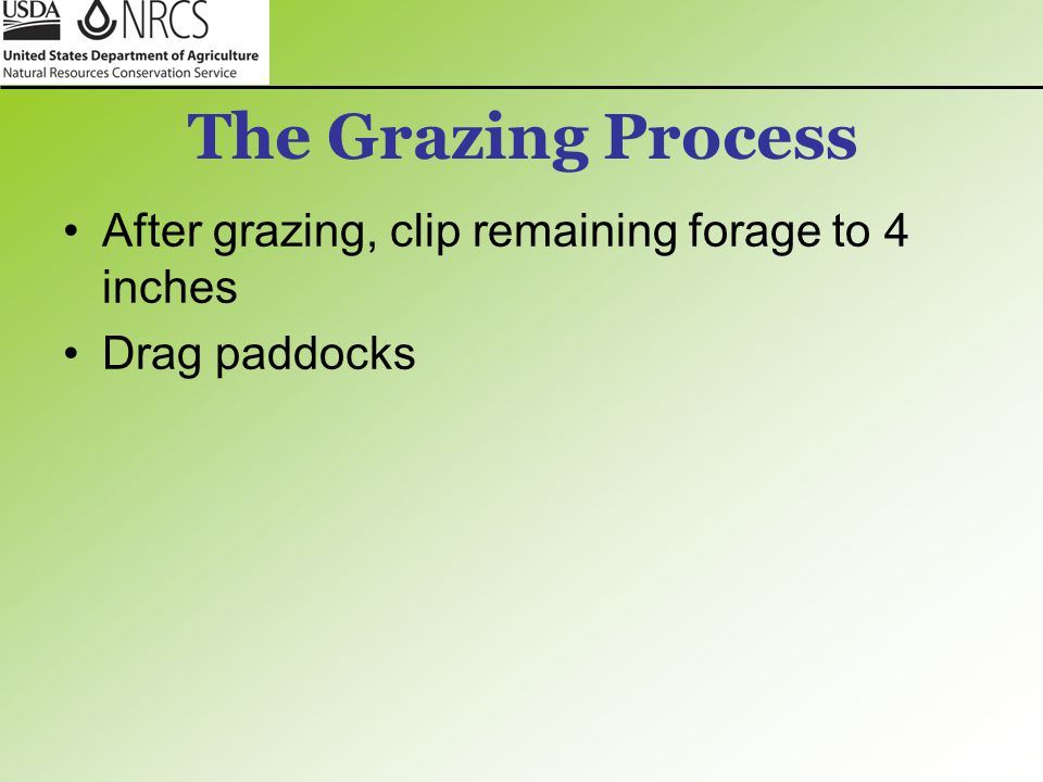 The Grazing Process After grazing, clip remaining forage to 4 inches