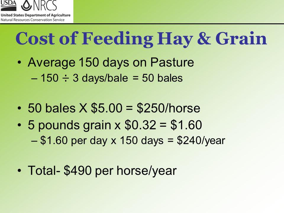 Cost of Feeding Hay & Grain