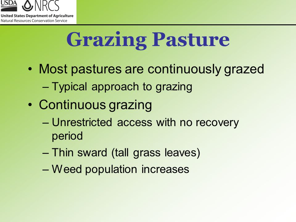 Grazing Pasture Most pastures are continuously grazed