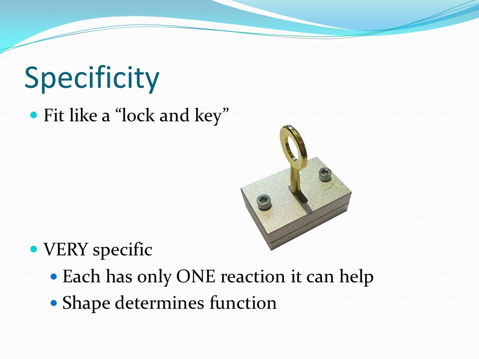 Specificity Fit like a lock and key VERY specific
