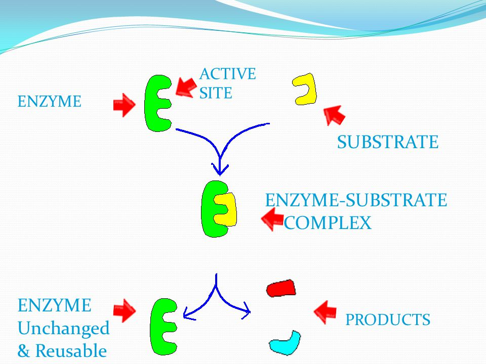 SUBSTRATE ENZYME-SUBSTRATE COMPLEX ENZYME Unchanged & Reusable