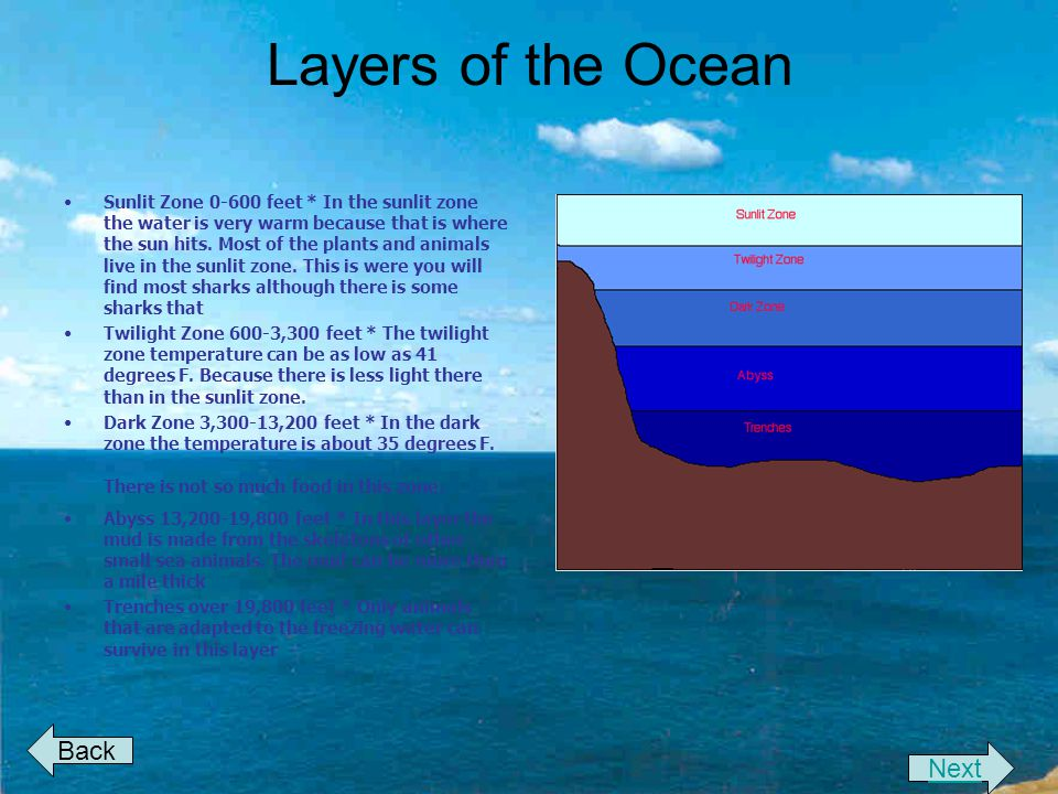 Layers of the Ocean Back Next