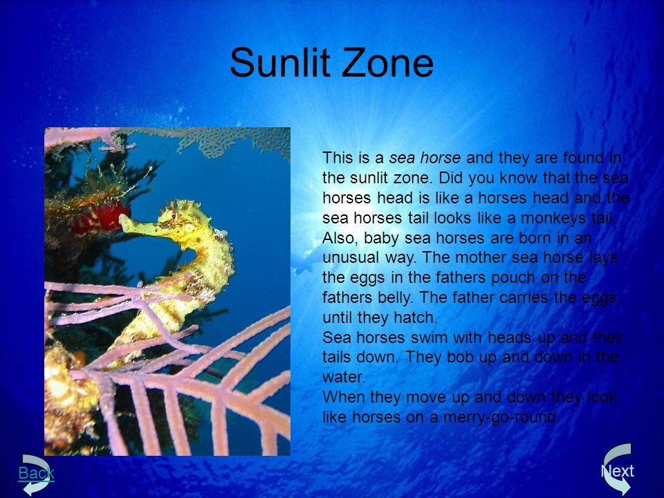 Sunlit Zone