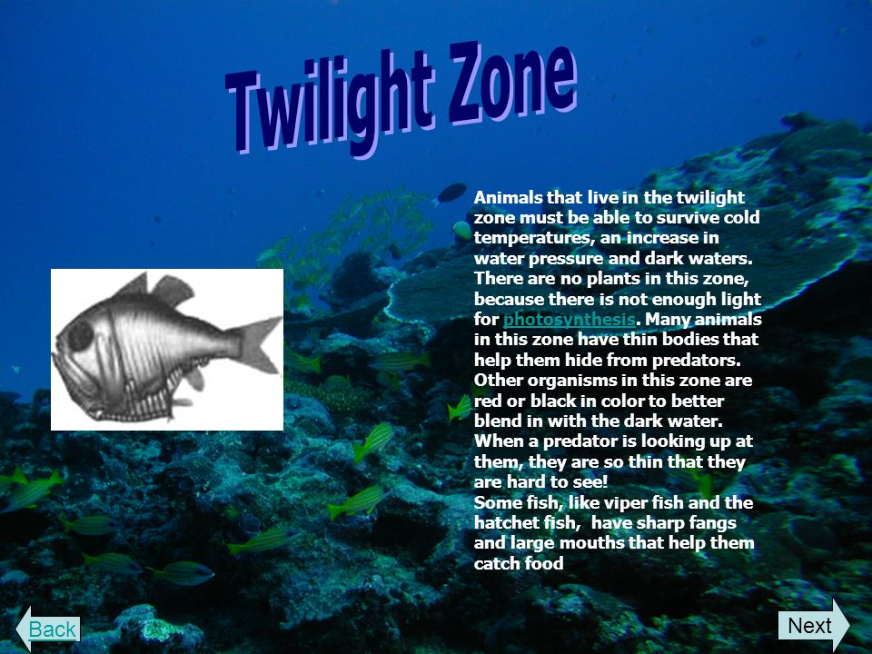 Welcome to the animal life in the ocean ppt video online for Twilight zone fish