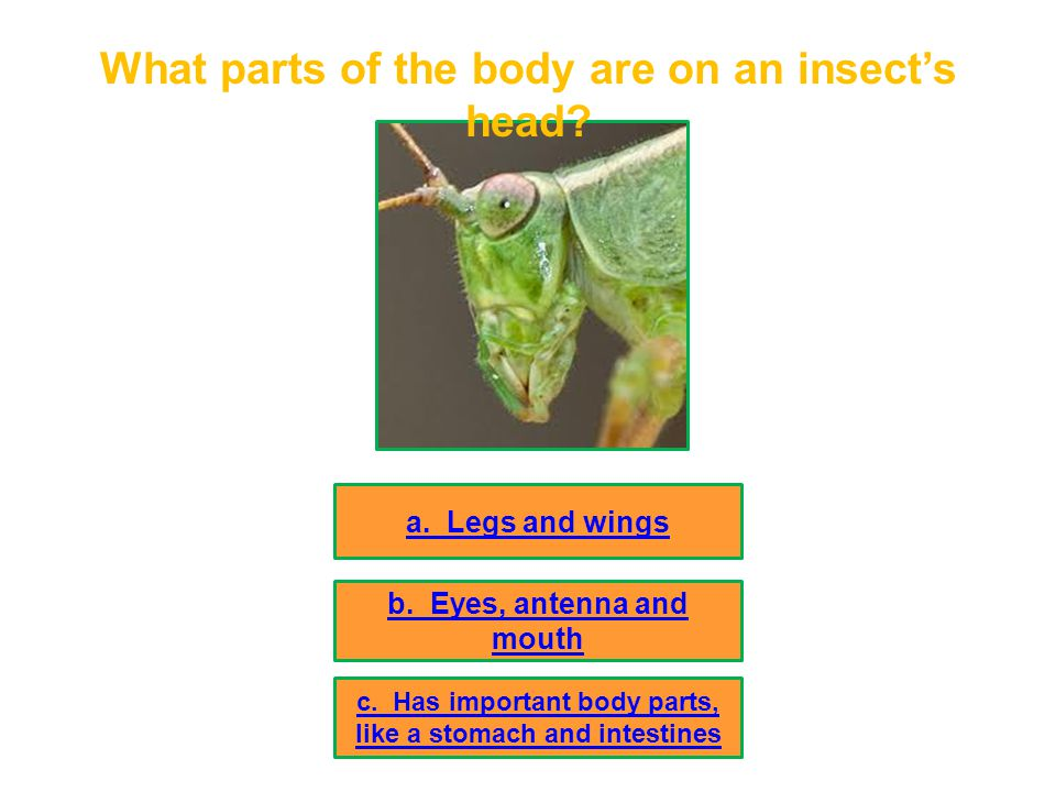 What parts of the body are on an insect's head