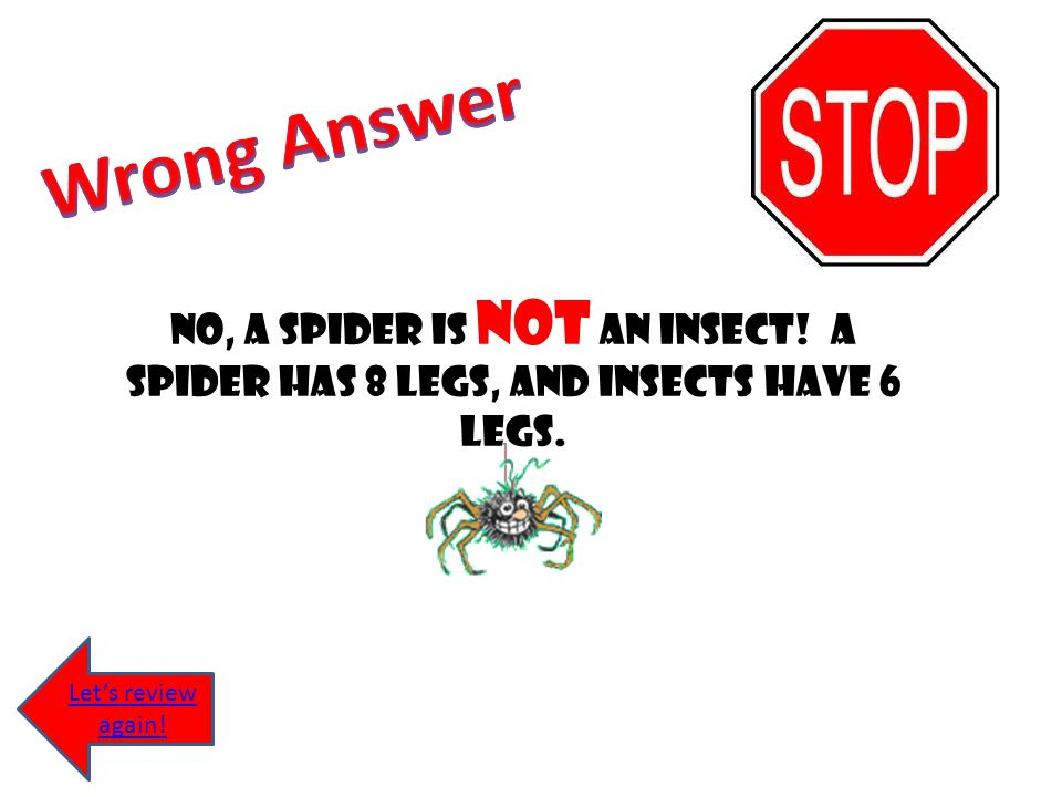 Wrong Answer No, a spider is not an insect. A spider has 8 legs, and insects have 6 legs.