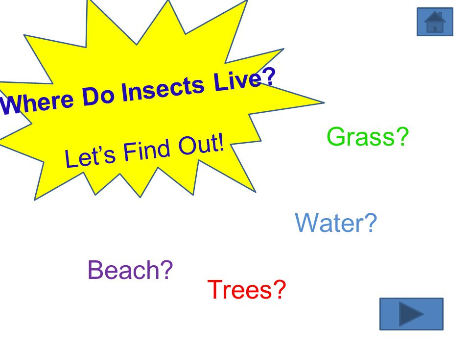 Where Do Insects Live Let's Find Out! Grass Water Beach Trees