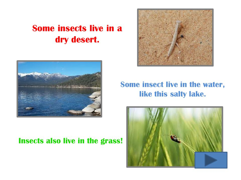 Some insect live in the water,