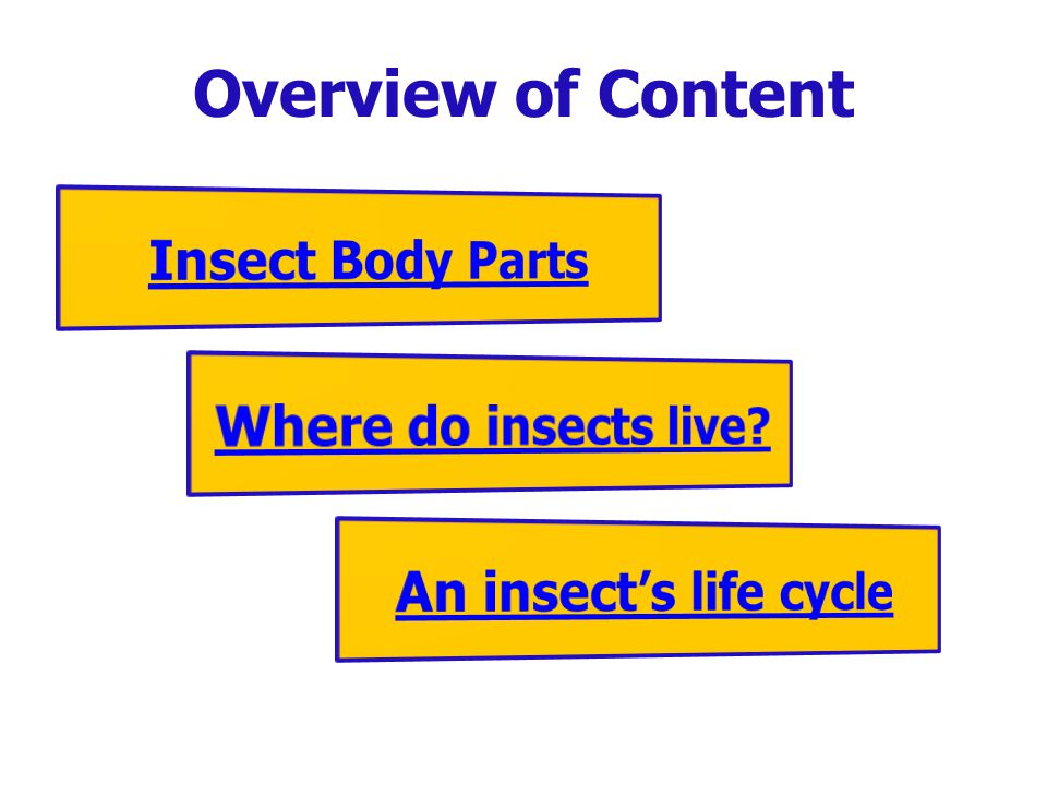 Overview of Content Insect Body Parts Where do insects live