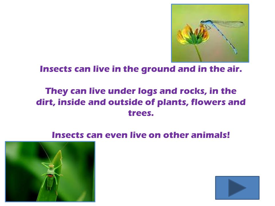 Insects can live in the ground and in the air.