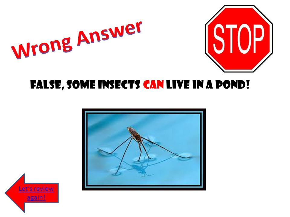 False, some insects can live in a pond!