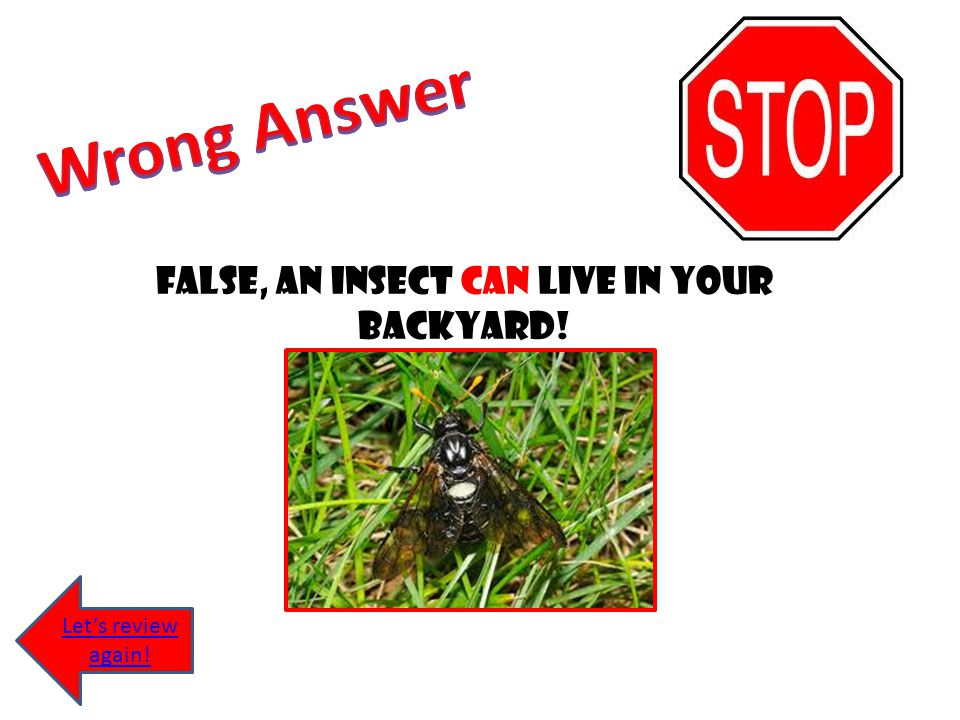 False, An insect can live in your backyard!