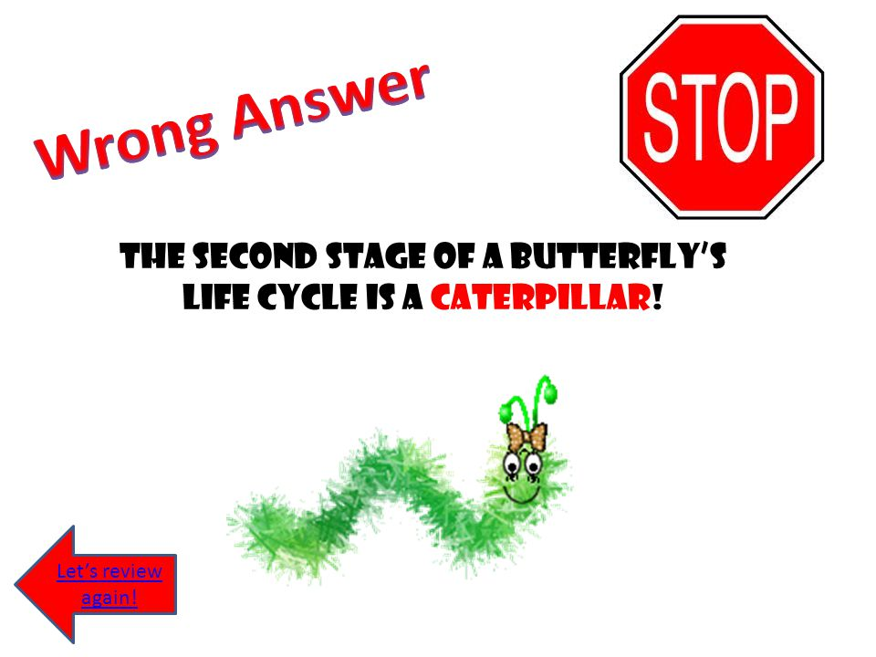 The second stage of a butterfly's life cycle is a caterpillar!