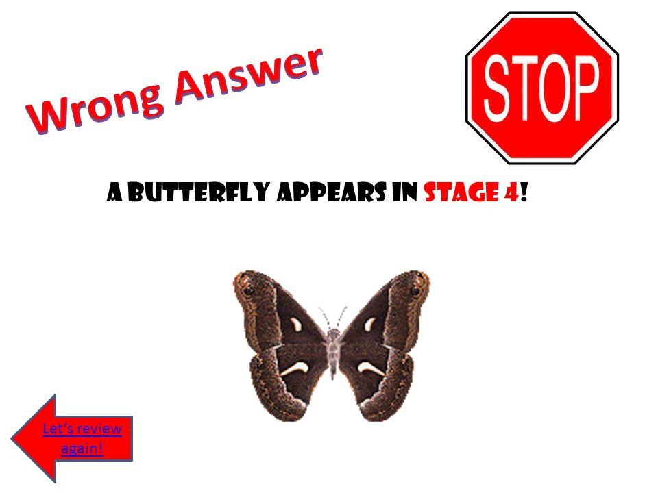A butterfly appears in stage 4!