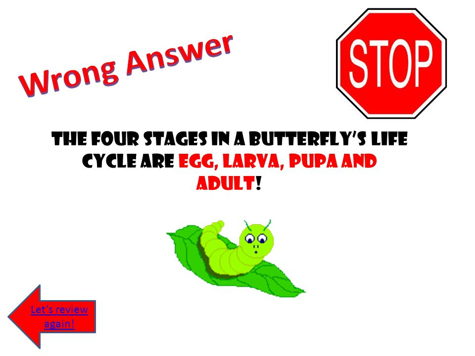 Wrong Answer The four stages in a butterfly's life cycle are egg, larva, pupa and adult.