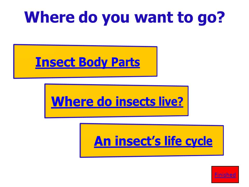 Where do you want to go Insect Body Parts Where do insects live