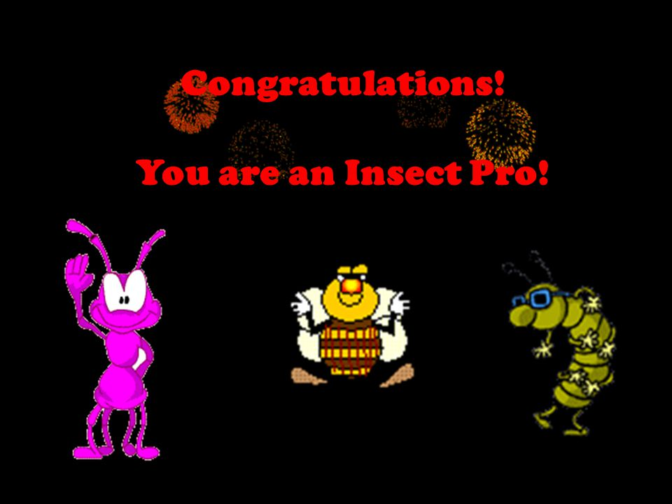 Congratulations! You are an Insect Pro!