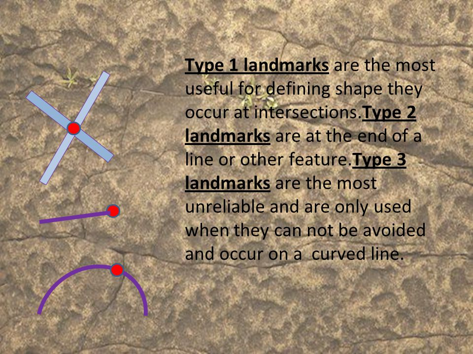 Type 1 landmarks are the most useful for defining shape they occur at intersections.Type 2 landmarks are at the end of a line or other feature.Type 3 landmarks are the most unreliable and are only used when they can not be avoided and occur on a curved line.