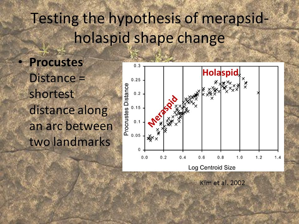 Testing the hypothesis of merapsid-holaspid shape change