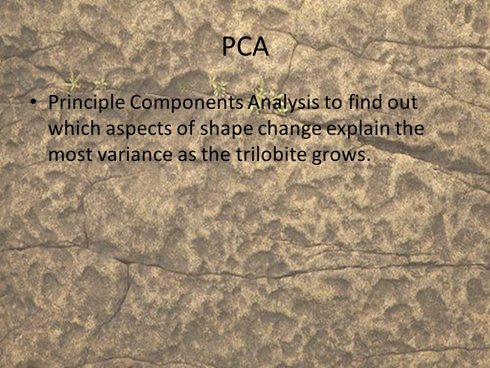 PCA Principle Components Analysis to find out which aspects of shape change explain the most variance as the trilobite grows.