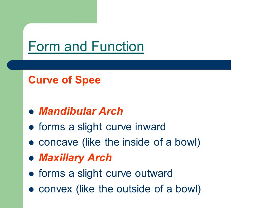 Form and Function Curve of Spee Mandibular Arch