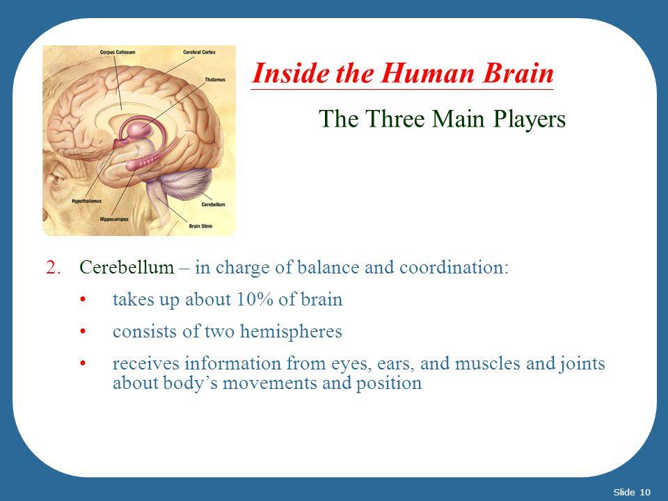 Inside the Human Brain The Three Main Players