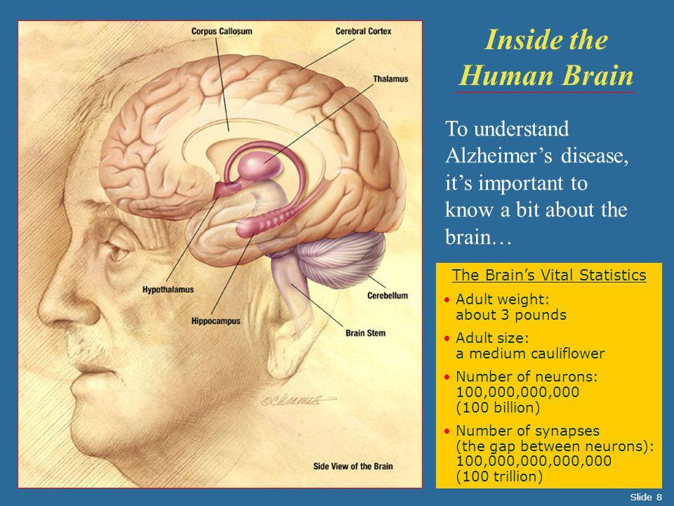 The Brain's Vital Statistics
