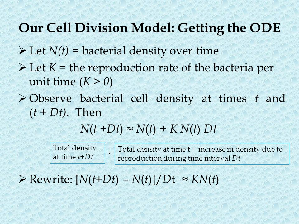 Our Cell Division Model: Getting the ODE
