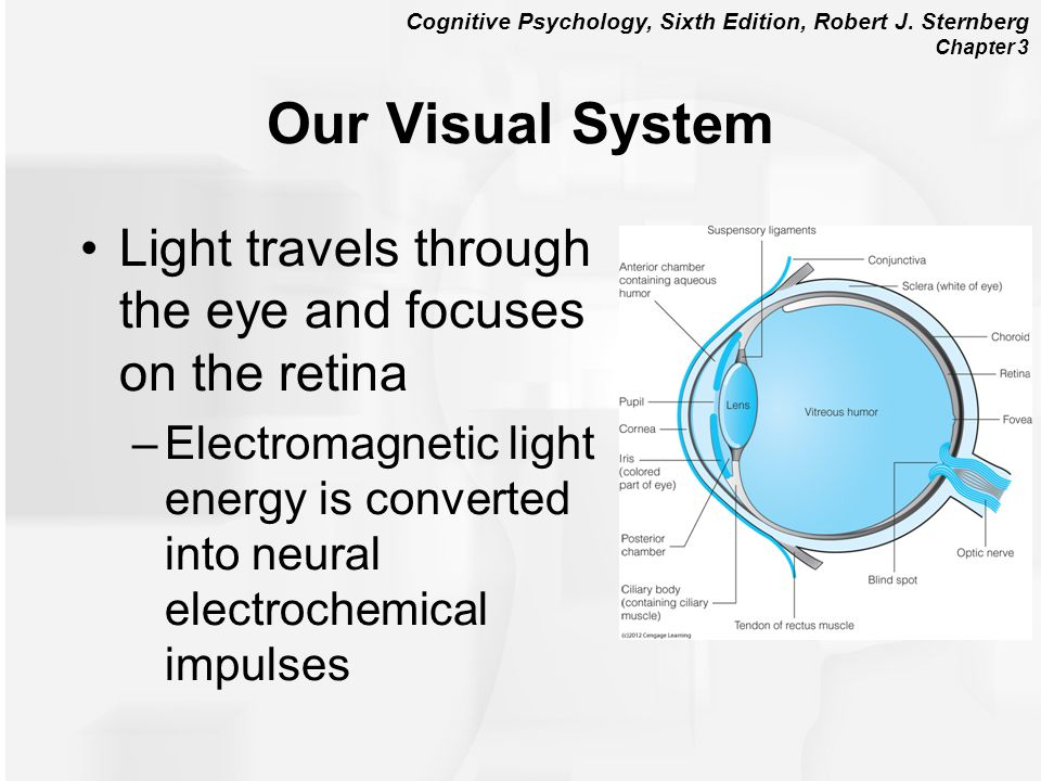 Our Visual System Light travels through the eye and focuses on the retina.