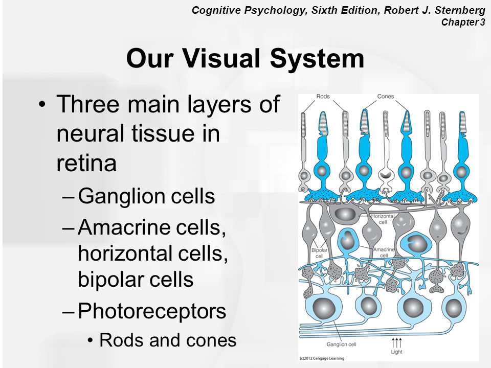 Our Visual System Three main layers of neural tissue in retina