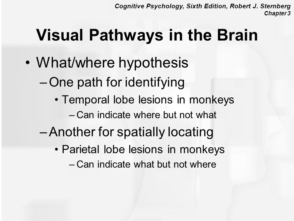 Visual Pathways in the Brain