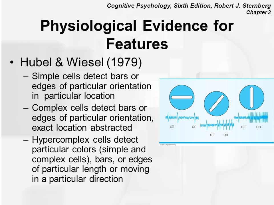 Physiological Evidence for Features