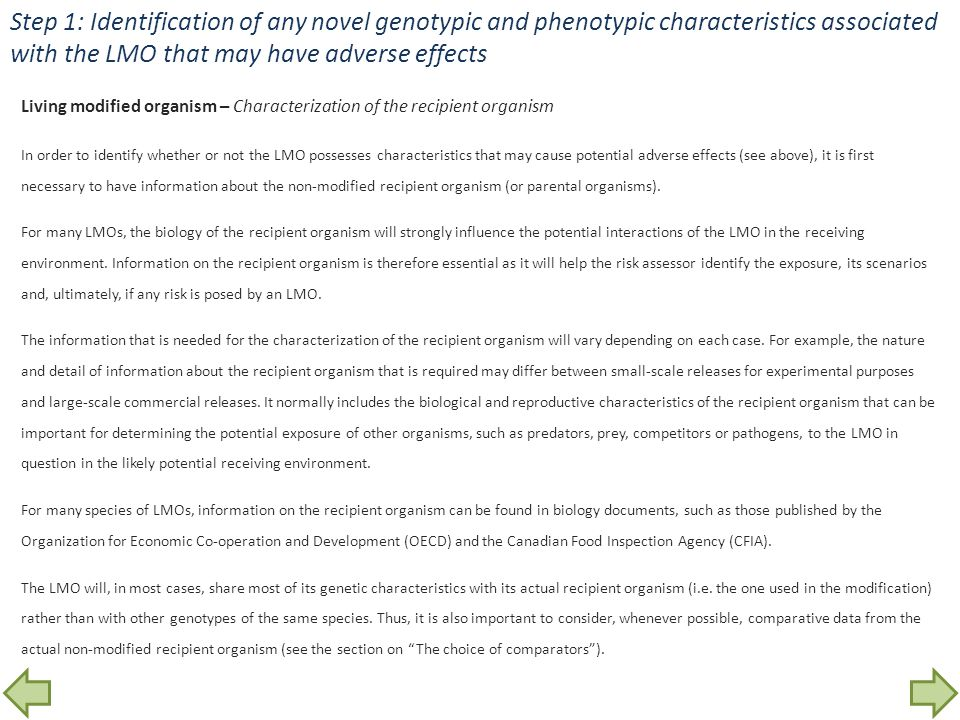 Step 1: Identification of any novel genotypic and phenotypic characteristics associated with the LMO that may have adverse effects