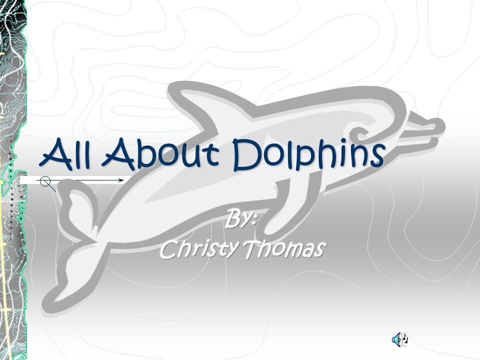 All About Dolphins By: Christy Thomas