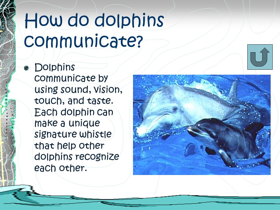 How do dolphins communicate