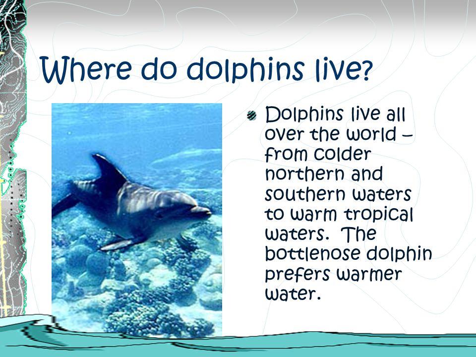 Where do dolphins live