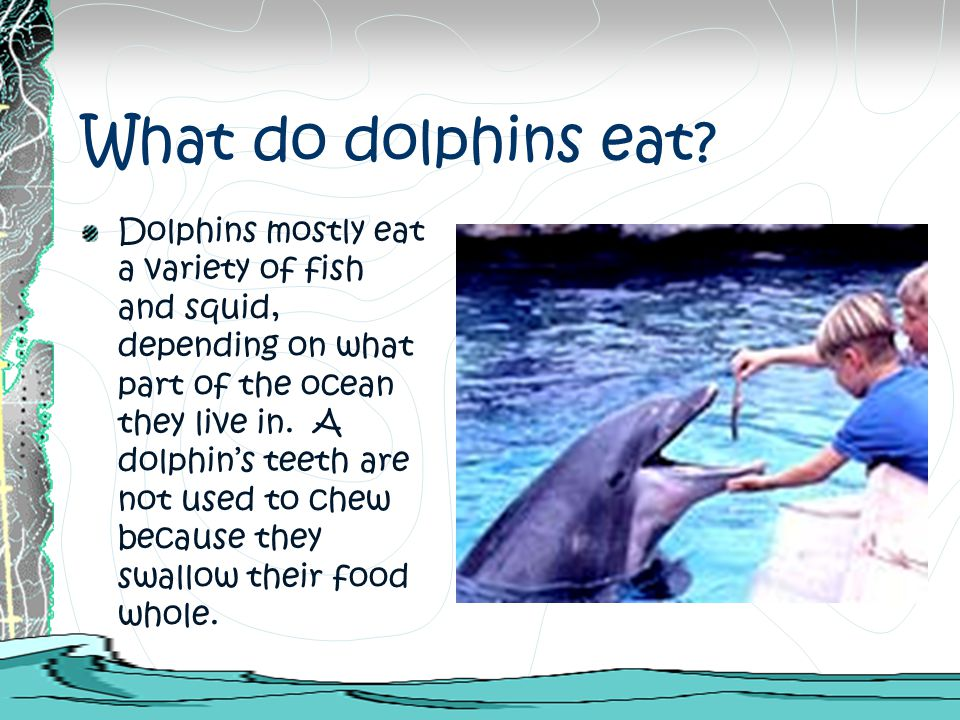 How Do Bottlenose Dolphin Eat Their Food
