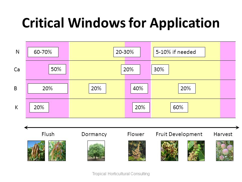 Critical Windows for Application