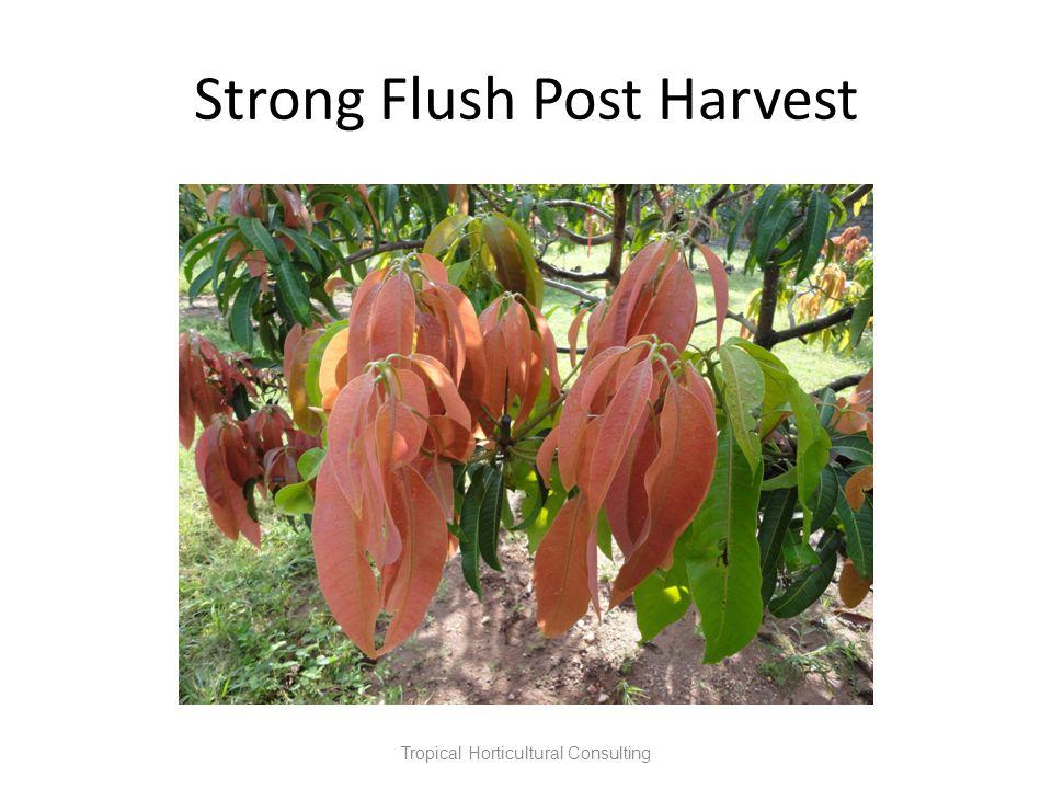 Strong Flush Post Harvest