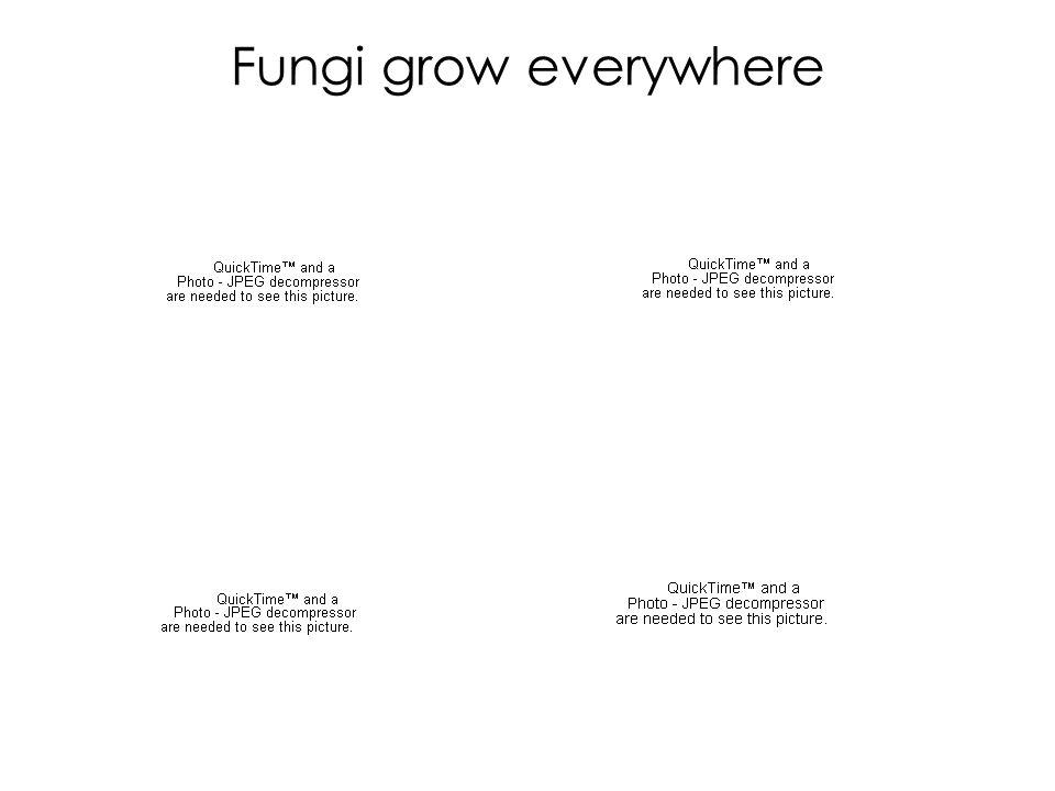 Fungi grow everywhere