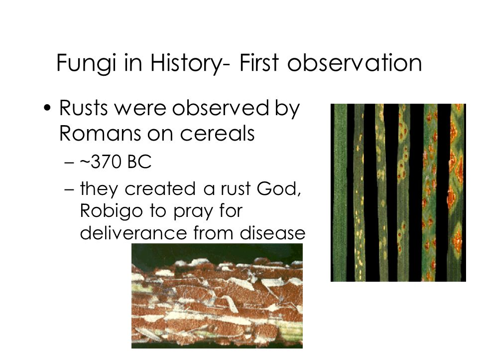 Fungi in History- First observation