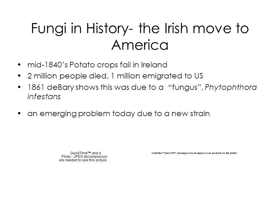 Fungi in History- the Irish move to America