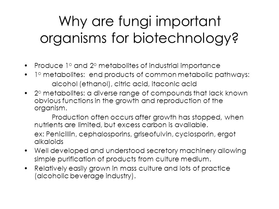Why are fungi important organisms for biotechnology