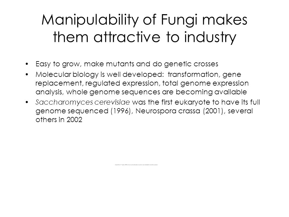 Manipulability of Fungi makes them attractive to industry