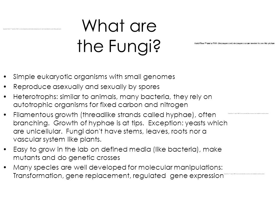 What are the Fungi Simple eukaryotic organisms with small genomes