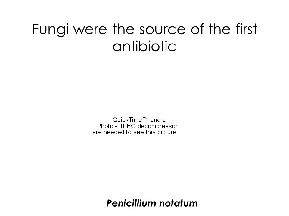 Fungi were the source of the first antibiotic