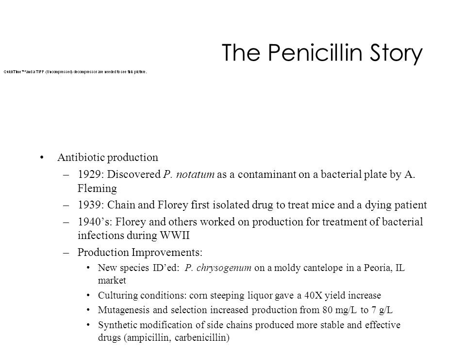 The Penicillin Story Antibiotic production