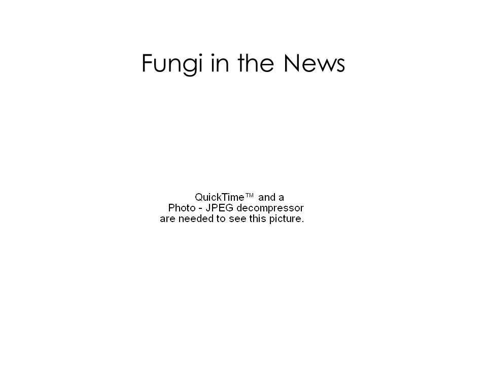 Fungi in the News